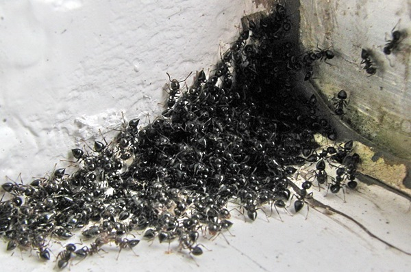 Your Ants will be gone… Guaranteed ! | Newcastle Pest Control | Ph ...